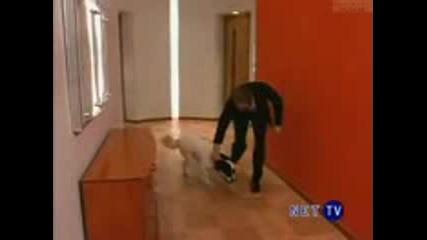 Dyr - кучето на Октавио