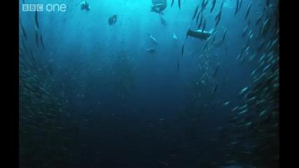 Подводният Армагедон Hd