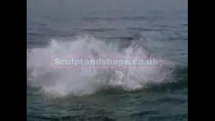 Акула Атакува На Забавен Кадър!!!