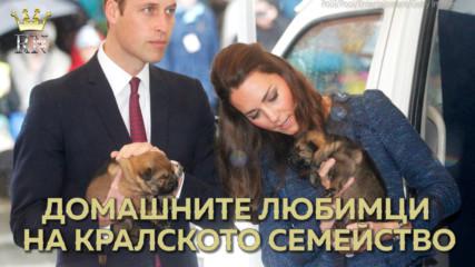 Домашните любимци на кралското семейство