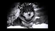 Game Over - Вълк Единак