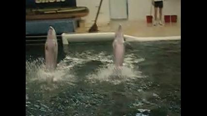 - Delfiinhiitaa .. [2]