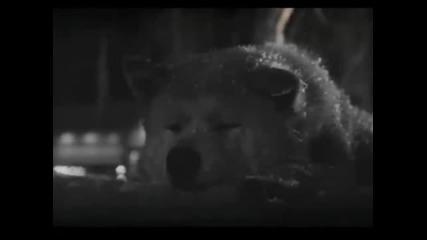 Хачико-тъжната история на най-лоялното и прекрасно куче в света!