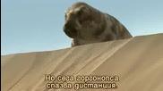 Вървейки С Чудовища Животът Преди Динозаврите Епизод 3 Част 1
