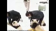 Сладки Панди
