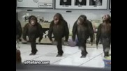 Яко смях - Танцуващи Маймунки