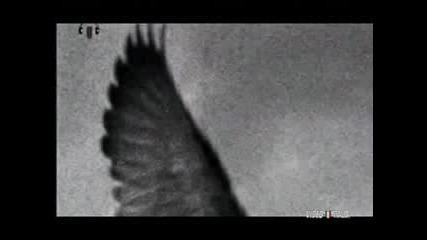 Antonello Venditti - Che fantastica storia la vita