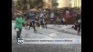 Традиционно надбягване с елени в Аляска