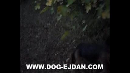 Kopoy 6 www.dog - ejdan.com