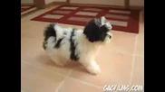 Кученце Срещу Огледало