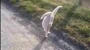 Котка акробат!