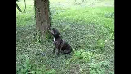 Куче Се Катери По Дърво