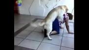 Куче налетя на бабка