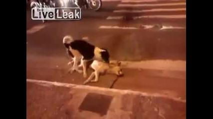 Куче пази мъртвото си другарче