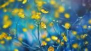 Жълти цветя и пеперуди! ... (music Chamras Saewataporn)
