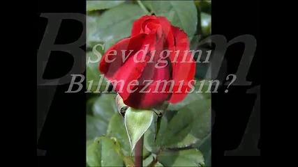 Ay Parcam Gulum Sevdigim -ilahi www.beyzam.piczo.com