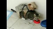 Куче напъва котка !