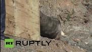 Морски лъв, решил да се разходи из Окланд, е заловен и пуснат отново в естествената си среда