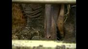 В Берлин се появи бебе слон