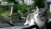 Янева котка ловува чистачки