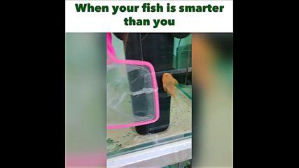 Когато рибката ти е по-умна от теб Хахахах
