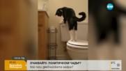 Може ли котката да пусне казанчето в тоалетната?