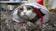 Коледен чорап и Дебелото Коте Мару