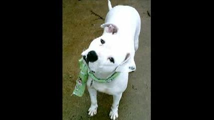 Кучетата Са Такива, Каквито Ги Направим