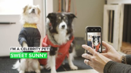 I'm a Celebrity Pet! How Sunny the blind dog shows people the way