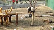 Пандата Пупу - младата надежда на китайската гимнастика