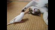 Папагал не дава спокойствие на котка