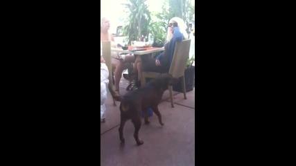 Това куче просто събира бакшиша
