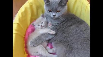 Котка гушка малкото си:)