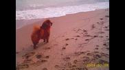 Дидка Най - Красивото Куче