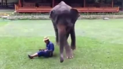 Как Слона защитава собственика!!!