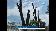 Еколози скочиха срещу кметството в Хасково заради сеч на дървета - Новините на Нова