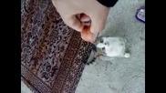 Опасна Мацка