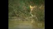 Kevin Richardson - Говорещия с лъвове Нещо Невероятно
