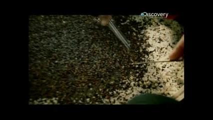 Треска за злато :в джунглата (част 2 )