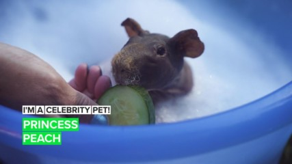 I'm a Celebrity Pet! Princess Peach's surprising life