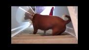 Сладко кученце се преборва със стъпалата!