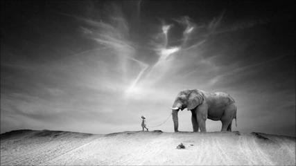 Ten Walls - Walking with Elephants
