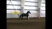 Horses !!! Yveline