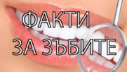 10 интересни факта за зъбите