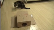 Котето Мару .. Малко Сладурче ..