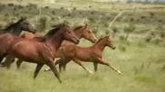 Диви препускащи коне