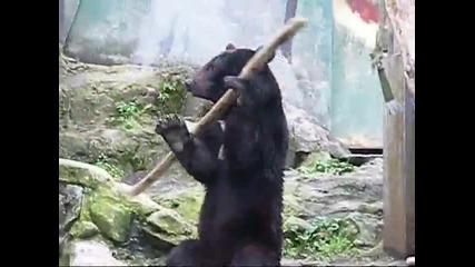 Кунг Фу Мечка.. (кунг фу панда ряпа да яде :] )