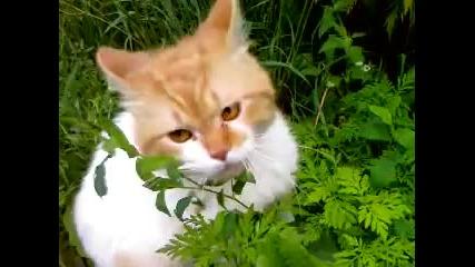 Не дразните кошек... Сука...