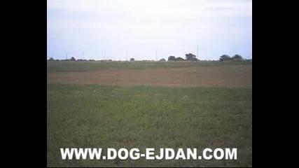 Kopoy www.dog - ejdan.com