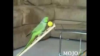 Lud & Mn Slduk Papagal